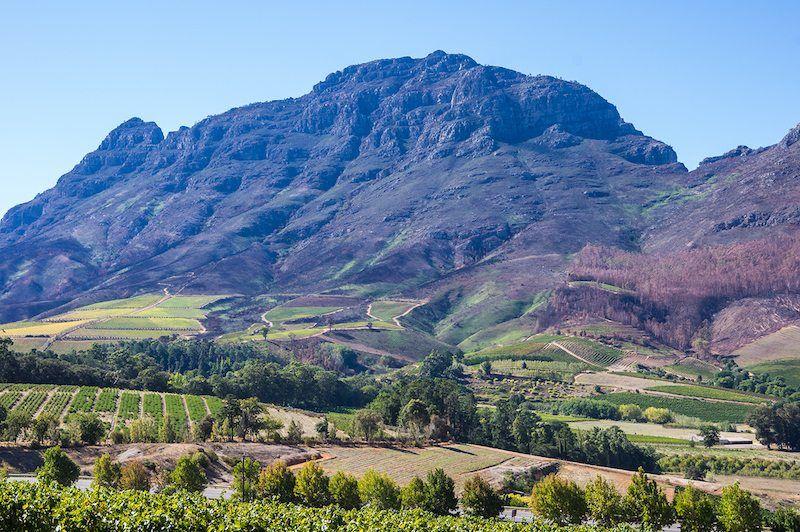 Weinbaugebiet in Südafrika