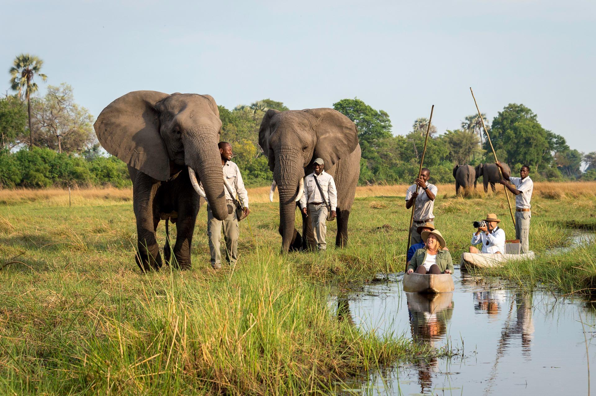 Flitterwochen im Abu Camp, Botswana