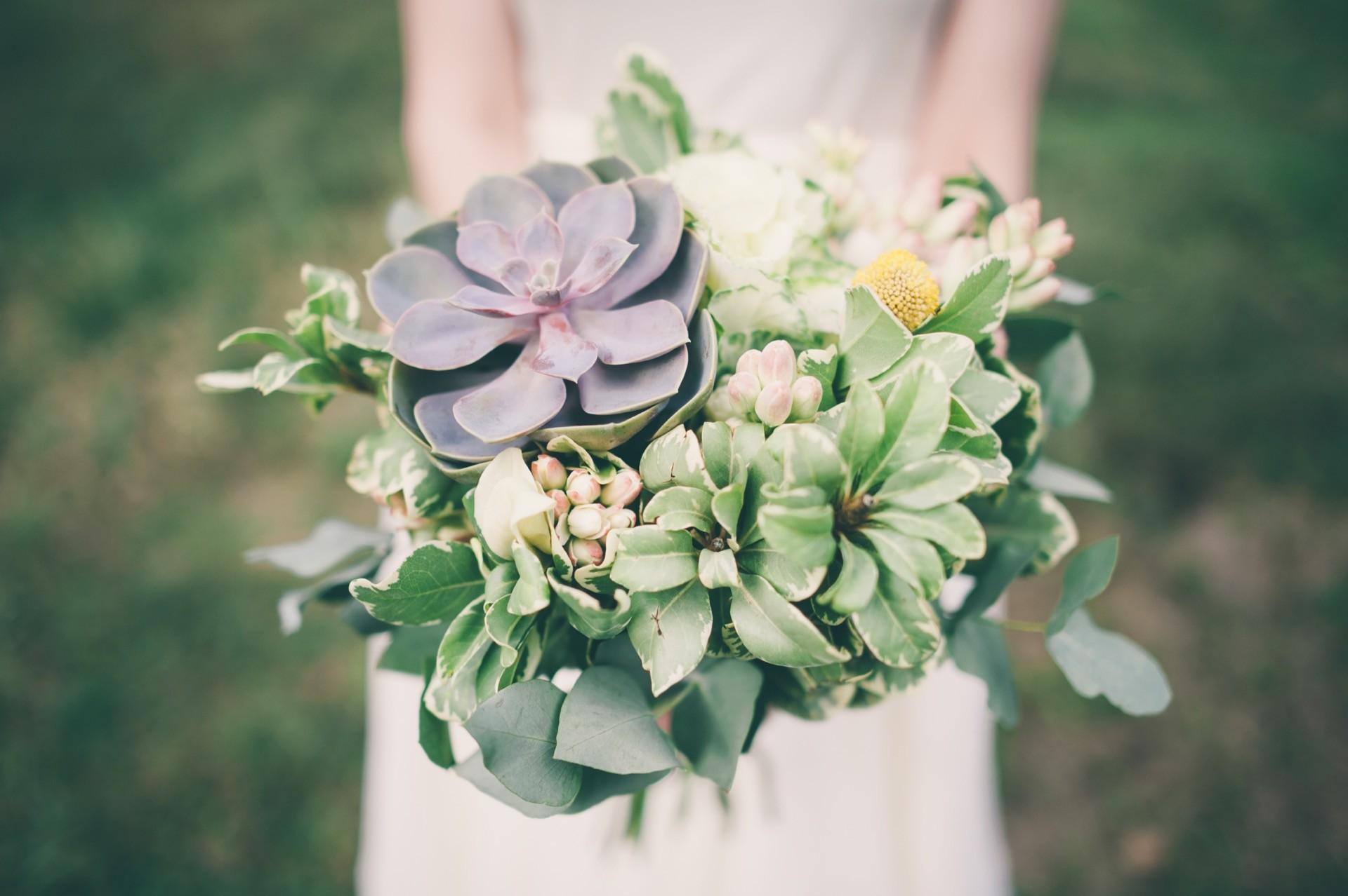Hochzeitsblume Sukkulente