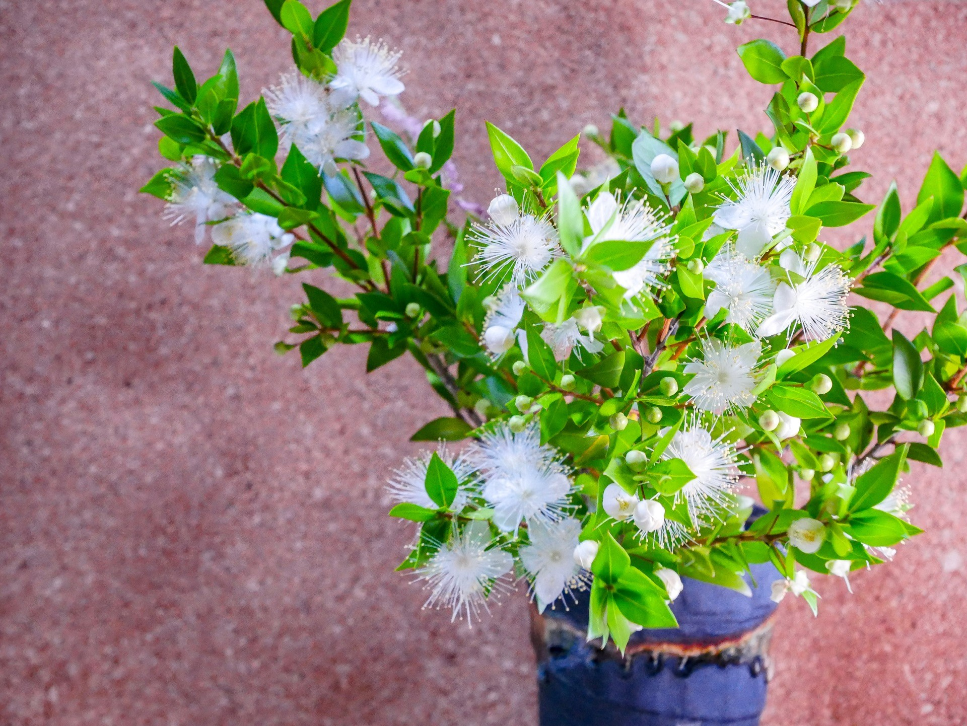 Hochzeitsblume Myrte