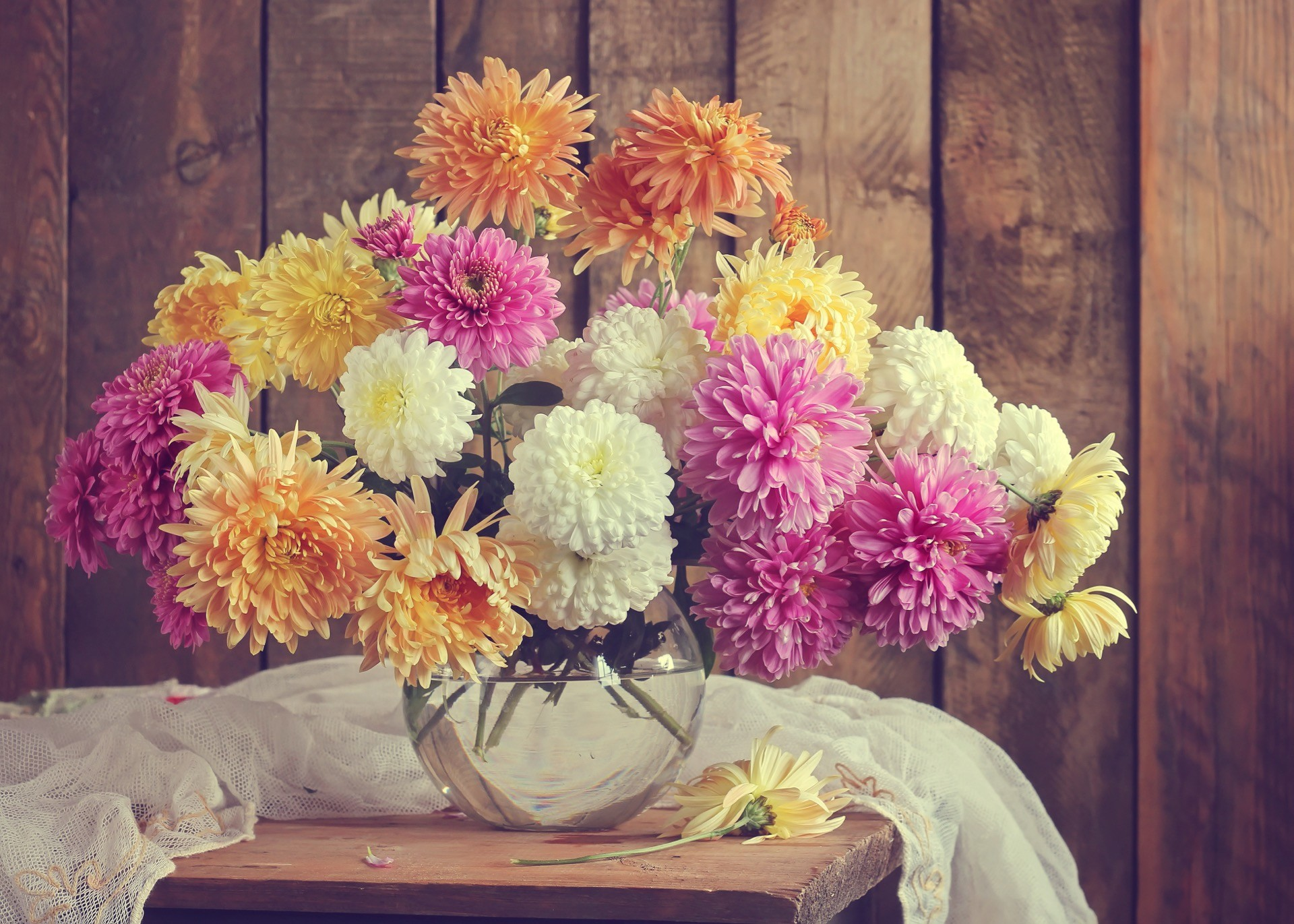 Hochzeitsblume Chrysantheme