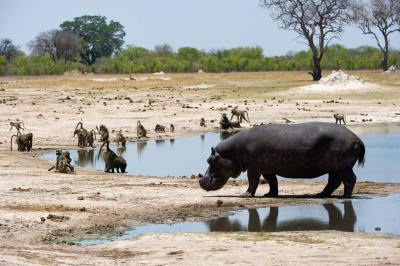Flitterwochen im Little Makalolo Camp, Zimbabwe